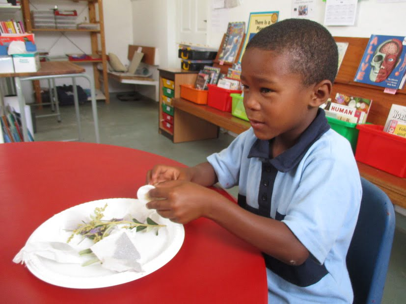 Exploring our world through smell and taste